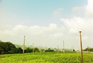 よい天気。iPhoneのトイカメラアプリで撮りました。