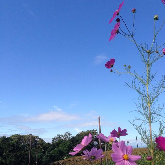 今朝は良い天気でした^_^